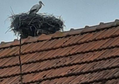 Storch im Nest auf Dach